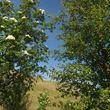 Scottish mix – Rowan & birch