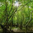 Copse tree pack – trees2