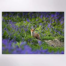 Woodland Trust - Fox in the Bluebells jigsaw