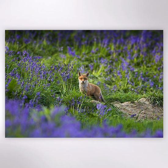 Woodland Trust - Fox in the Bluebells jigsaw