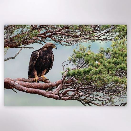 Woodland Trust - Golden Eagle at Loch Arkaig jigsaw