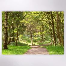Woodland Trust - Woodland Path by Ladybower Reservoir jigsaw