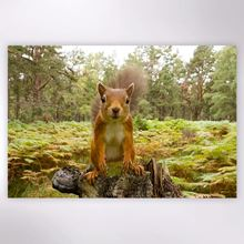 Woodland Trust - Red Squirrel jigsaw