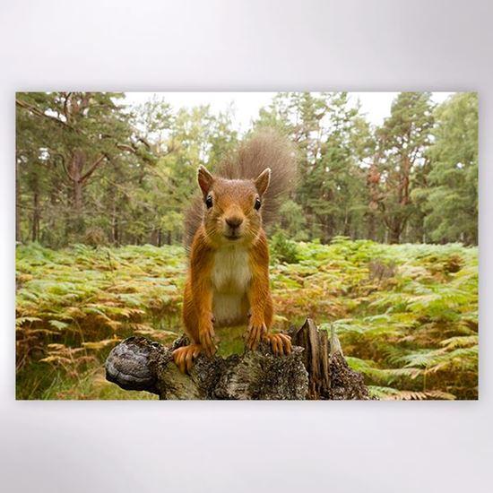 Woodland Trust - Red Squirrel jigsaw