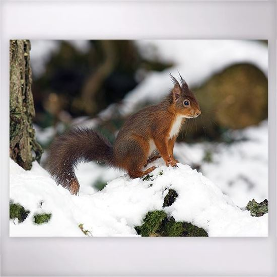 Woodland Trust - Squirrel in the Snow jigsaw