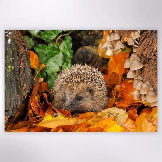 Woodland Trust - Woodland Hedgehog jigsaw
