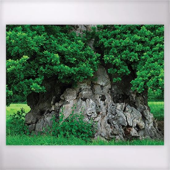 Woodland Trust - Wyndam's Oak jigsaw