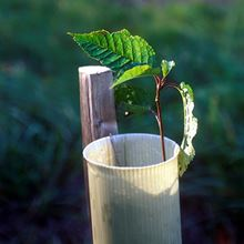 Tubes and stakes - sapling in tube