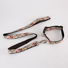 Dog collar and lead - squirrel and acorn design
