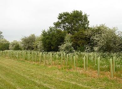 Picture for category Landowner trees