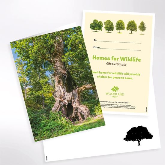 Homes for wildlife virtual gift pack
