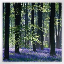 Woodland Trust note cards - bluebell wood design