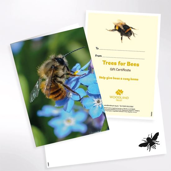 Trees for bees gift pack