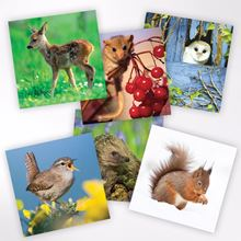 Woodland Trust notelets - wildlife designs