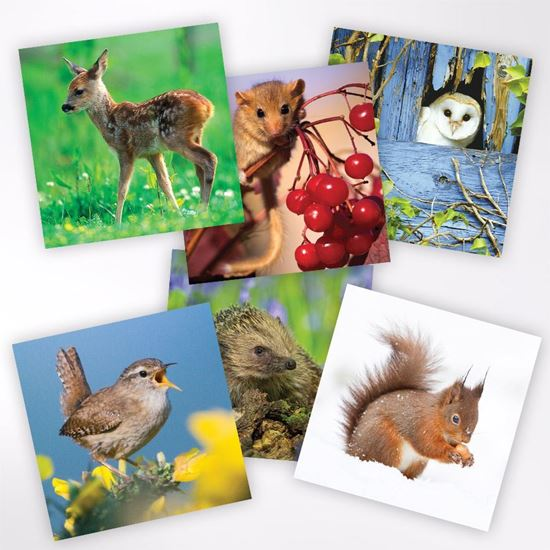 Woodland Trust notelets - wildlife designs