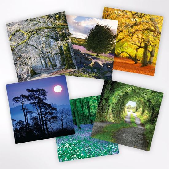 Woodland Trust notelets - tree designs