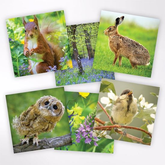 Woodland Trust note cards - spring designs