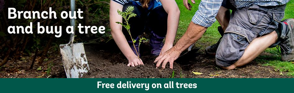 Branch out and buy a tree with free delivery on trees