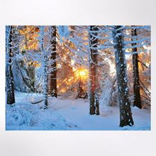 Sunrise in the Forest Christmas cards pack of 8