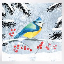 Blue Tit and Berries Christmas cards pack of 8