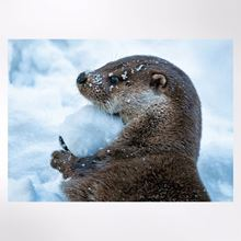 Otter with Snowball Christmas cards pack of 8