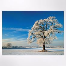 Winter Tree Christmas cards pack of 8