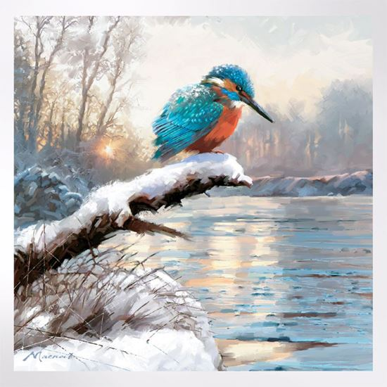 Kingfisher in the Snow Christmas cards  pack of 8