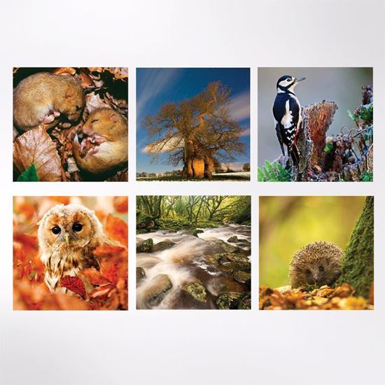 Woodland Trust large note cards - autumn