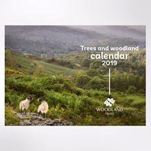Woodland Trust 2019 Tree Calendar