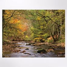 Autumn Days at Fingle Woods jigsaw