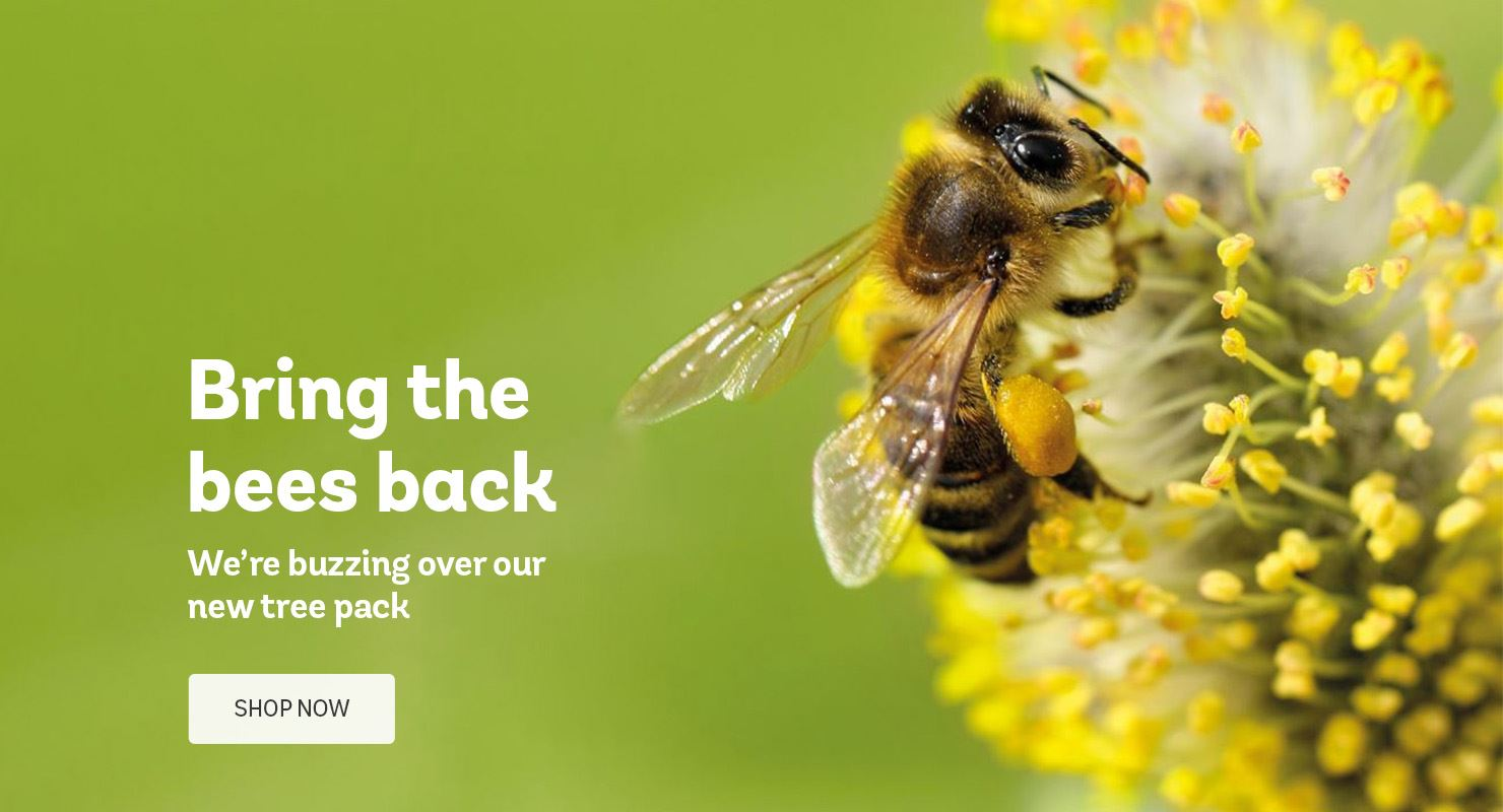 Bring the Bees Back