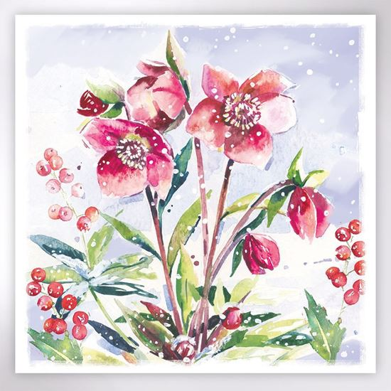 Picture of Hellebore in the snow Christmas cards