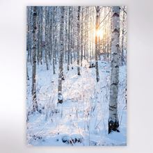 Picture of Snowy birch forest in sunlight