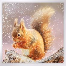Picture of Red squirrel feeding in winter Christmas cards