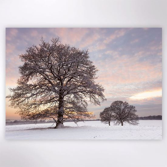Picture of Snow covered trees at sunset Christmas cards