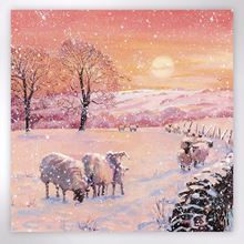 Picture of Sheep at sunset Christmas cards