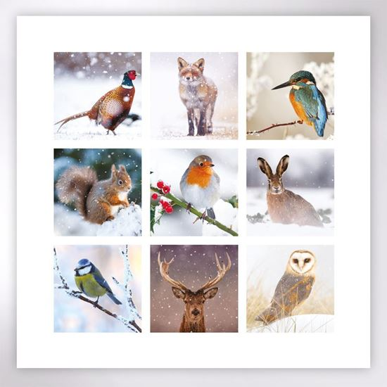 Picture of Woodland wildlife in winter Christmas cards