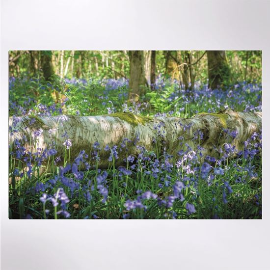 Picture of Bluebells at Sea Wood jigsaw