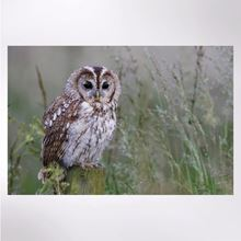 Picture of Tawny owl jigsaw