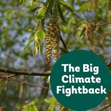 Hornbeam for the Big Climate Fightback