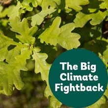 English oak for the Big Climate Fightback
