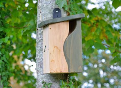 Picture for category Bird feeders, tables and boxes