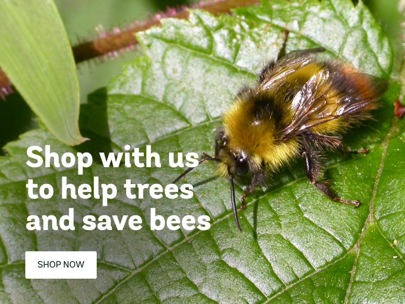 Trees save bees