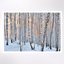 Sunlight through the birch trees Christmas cards