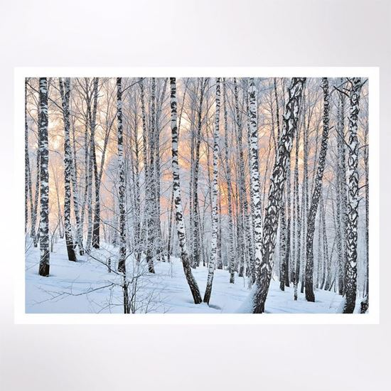 Sunlight through the birch trees Christmas cards