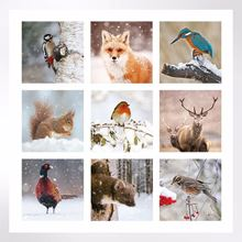 Winter Wildlife Christmas cards