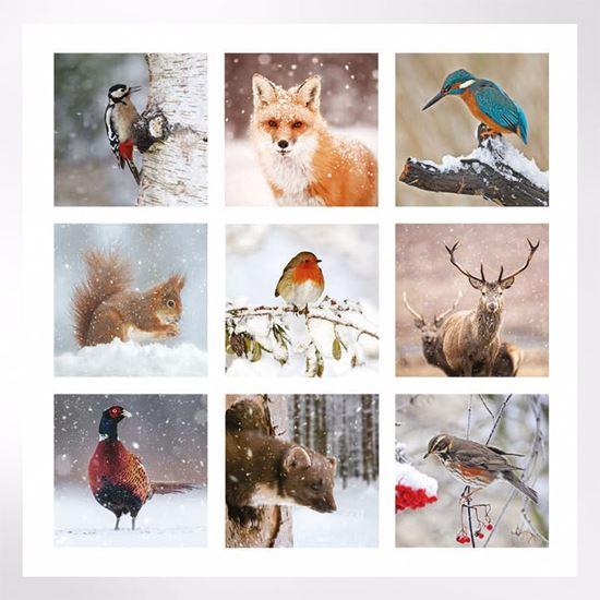 Winter Wildlife Christmas cards