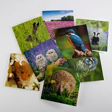 Woodland Trust spring joy notecards