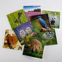 Woodland Trust spring joy notecards