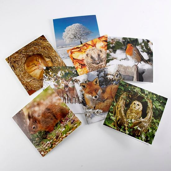 Woodland Trust cooler months notecards